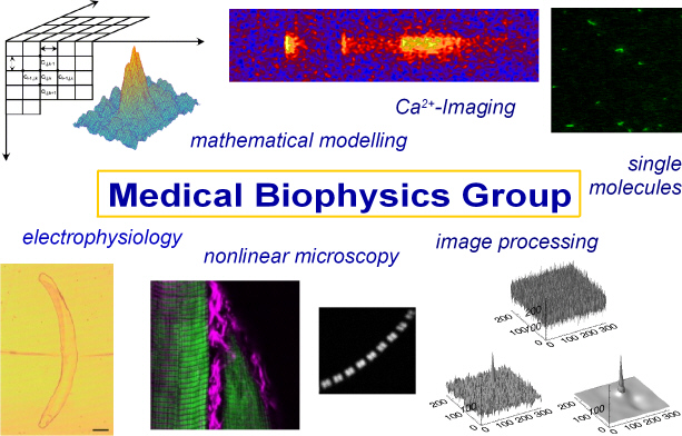Medical Biophysics Research Projects